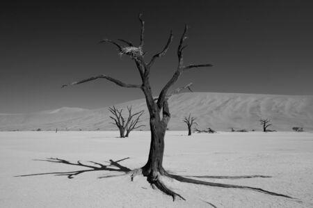 vlei: Dead trees in the Dead Vlei, Sossussvlei, Namibia Stock Photo