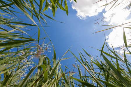 greem: Upside view to sky through greem grass Stock Photo