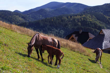 a slope: Horse family on the slope Stock Photo