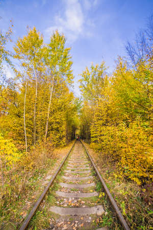 narrow gauge railroads: The Old railway in forest Stock Photo