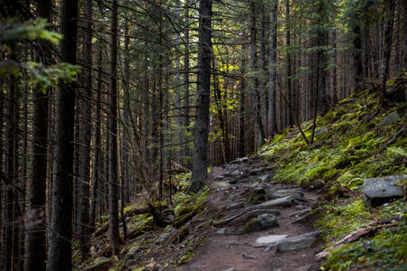 stoned: The Old beautiful forest with stoned trail between the trees