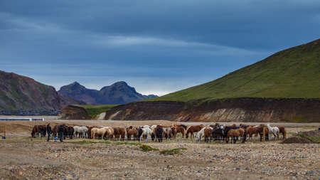 Paarden in stal in de vulkaanzone Landmannalaugar