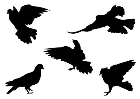 Vector drawing flocks of pigeons. Silhouette on white background Vector