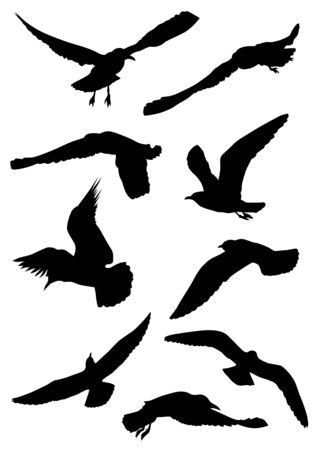 drawing of sea birds. Silhouettes of seagulls Vector