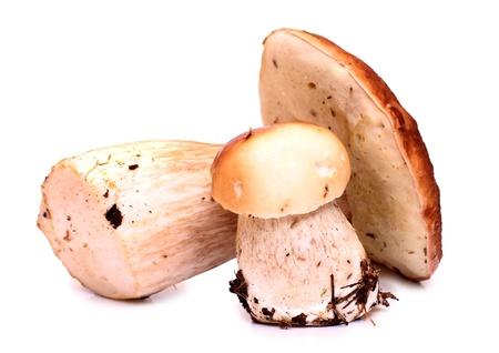 fungous: Color photo of wild mushrooms