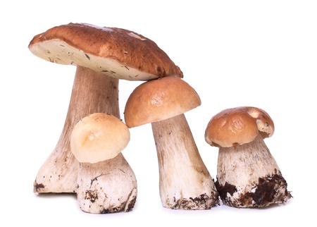 mycelium: Color photo of wild mushrooms