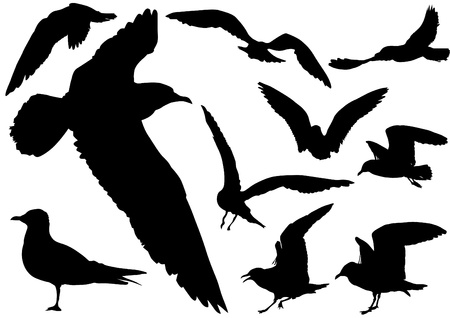 gull: drawing of seagulls in flight Illustration