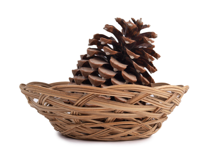 Big pine cone on a white background Stock Photo