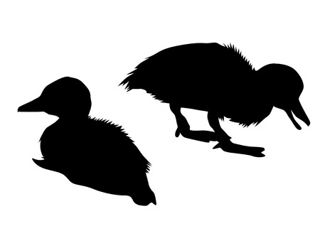 Flock of ducks in nature on a silhouette black and white background illustration. Иллюстрация