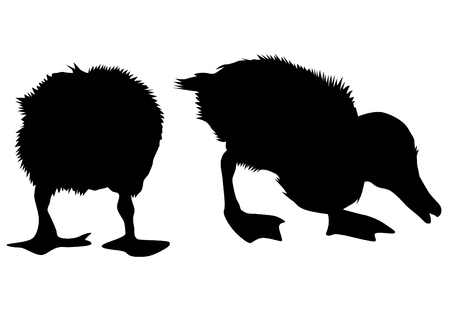 Flock of ducks in nature on a silhouette black and white background illustration.