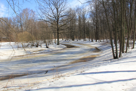 Melting snow in spring forest under the trees