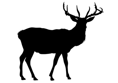 Wild deer with horns on a white background