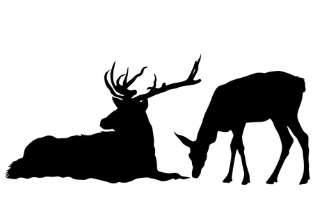 Wild deer with horns on a white background Illustration