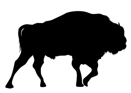 Large wild bison on a white background