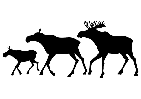 Wild elk family on a white background