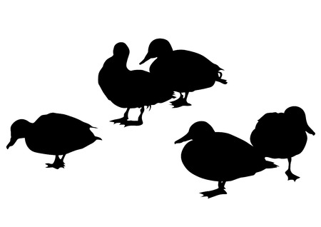 Wild ducks flock on white background Stock Illustratie