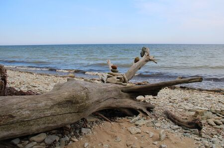 Wooden snag on stone Imagens - 127862601