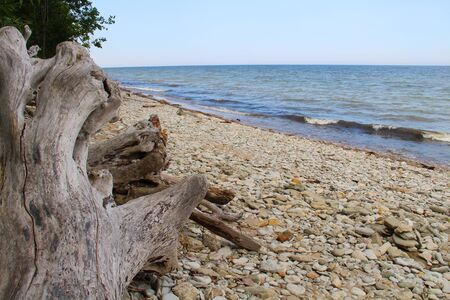 Wooden snag on stone