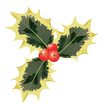 Holly Leaves And Berries.  Vector EPS10 Illustration.
