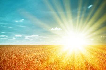 Agricultural theme. Bright sunbeams illuminated the wheatfield. Stock Photo