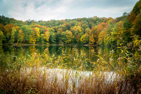 Forest lake among autumn grasses and trees. Fall color reflected in the still waters