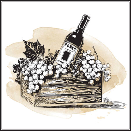 Wine bottle in wood basket with bunch of grapes in watercolor hand-drawn style vector illustration.