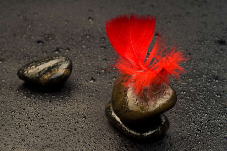 Red feather on stones relates to the drops of water Stock Photo