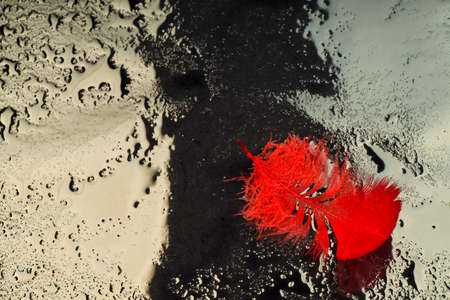 Red feather relating to a drop of water