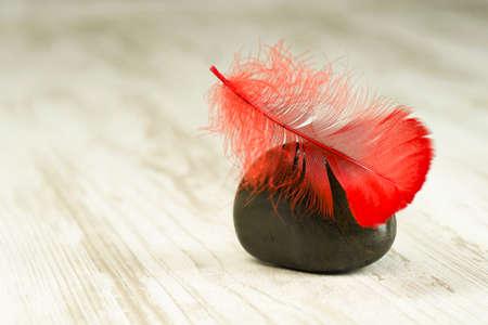 검은 돌에 붉은 깃털