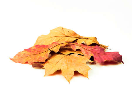 Colorful leaves isolated on a white background