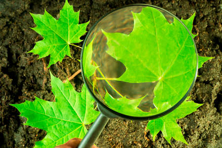 Ecology concept - looking through the magnifying glass on the green leaves of trees