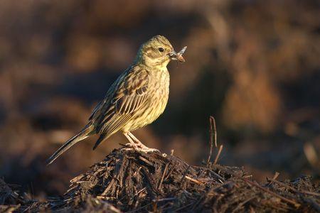 oiseau mouche: avec un petit oiseau mouche dans son bec Banque d'images