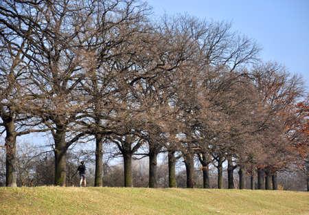 Men running along the trees photo