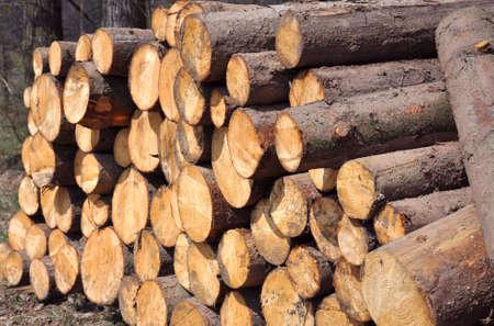 Wood piles  Stock Photo - 5003769