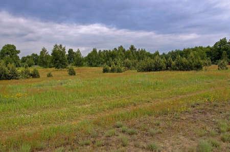 Colorful field, beautiful summer landscape Stock Photo - 7236598