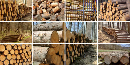 logging: A collage of different tzpes of wood piles, save of natural environment concept