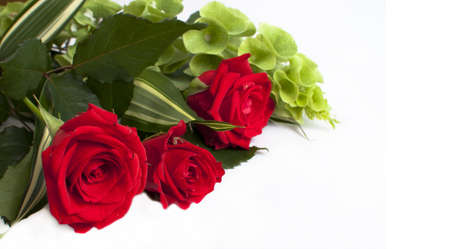 Red roses on white background photo