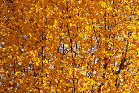 Background made of colorful leaves photo