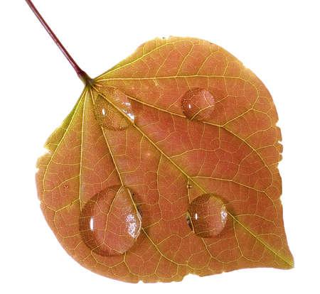 빗방울이있는 가을의 화려한 잎