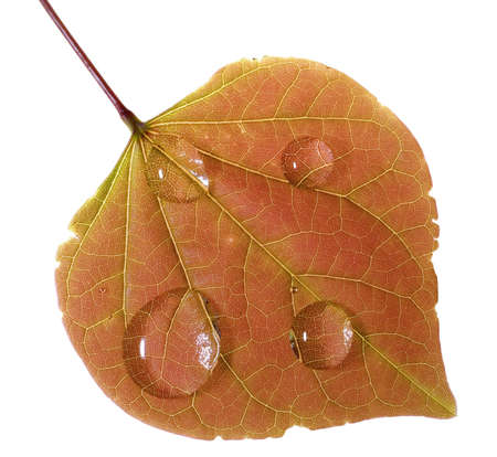 colorful leaf in the fall with raindrops
