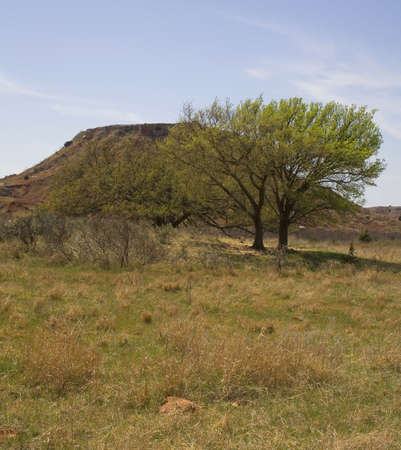 butte: mesquite tree in Oklahoma with a butte behind