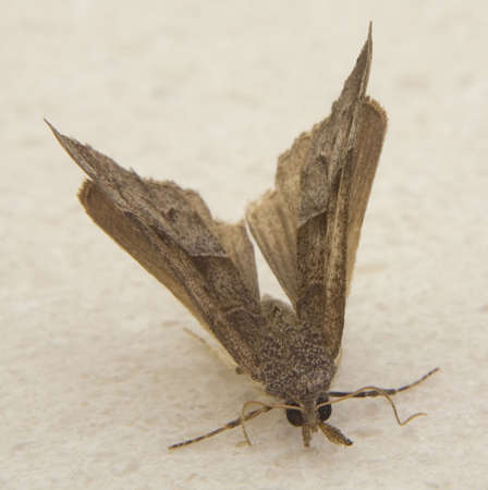 landed: moth that has just landed on a bathroom counter