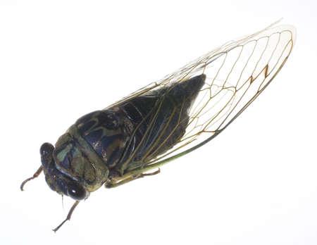large flying insect on a white Reklamní fotografie - 3616542