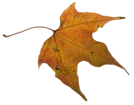 autumn leaf that has already changed color