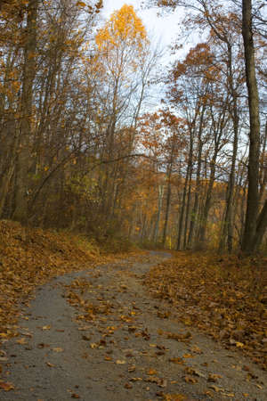 back road winding through a forest in the fall photo