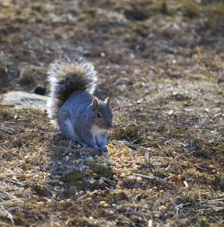 squirrel that is scooping up its next meal Banco de Imagens - 4314627