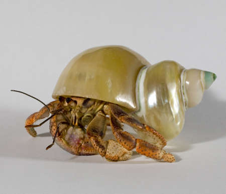 hermit crab taking his home for a walk
