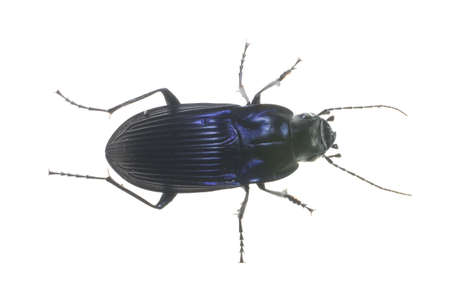 big black bug that has been isolated on a white background