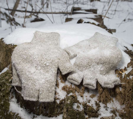 fingerless gloves: wool fingerless gloves on a snowy stump in winter