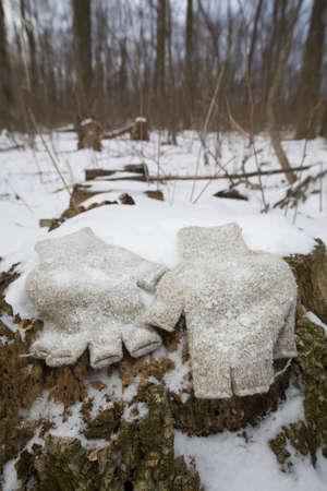 fingerless gloves: fingerless wool gloves that are on a snowy stump